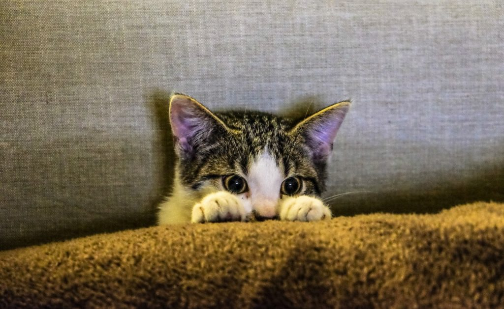 Why there's more to content than cute kittens and silly stories