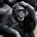 Are you scratching your head at the changes at MailChimp?